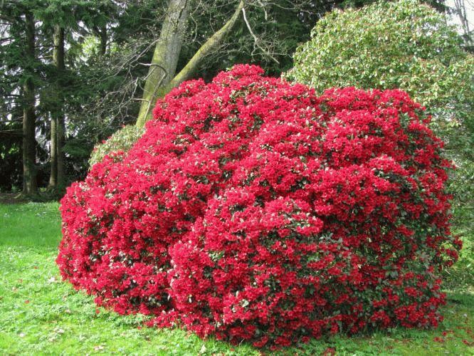 многолетние цветы фото и названия для сада