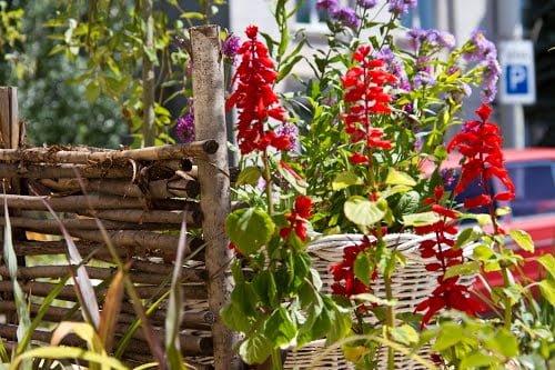 Цветник своими руками с оградой из плетня