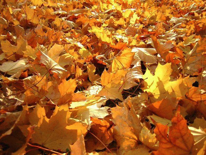 Пожарные Рубцовска: cухая листва - источник пожаров