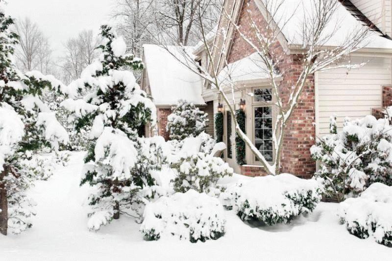 Зимний сад ландшафтный дизайн