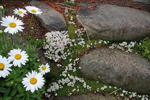 Как создать цветущую дорожку в саду