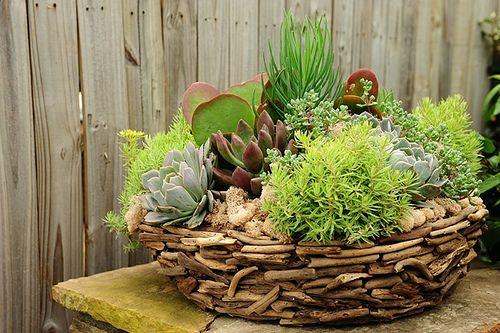 Миниатюрные растения в саду