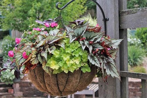 Выращивание цветов в контейнерах в саду