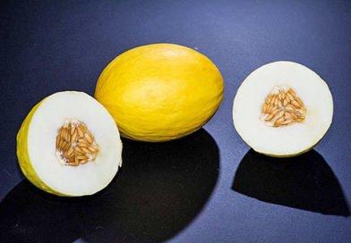 Дыня: райский плод, как считают арабы