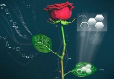 Регуляторы роста и развитие растений
