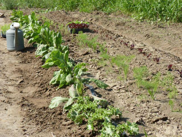 Важно, заранее подготовить грядку к подзимнему посеву