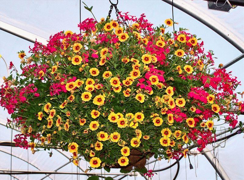 Как же красивы растения в подвесной корзине
