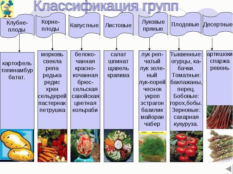 Классификация групп овощей