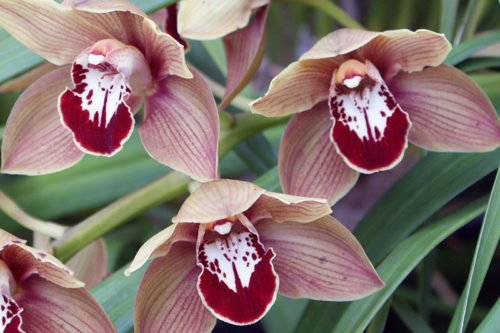 Посадка и уход за орхидеями в домашних условиях