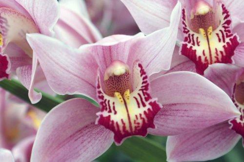 Уход за орхидеями в домашних условиях