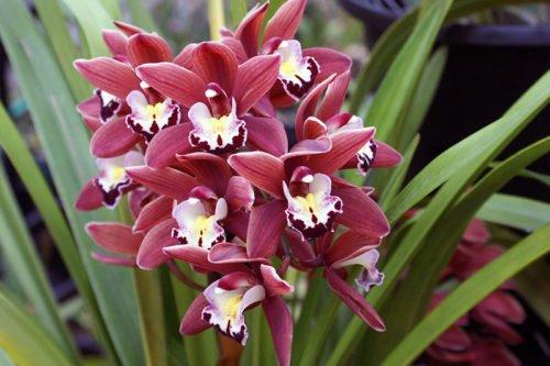 Как поливать орхидеи и как ухаживать