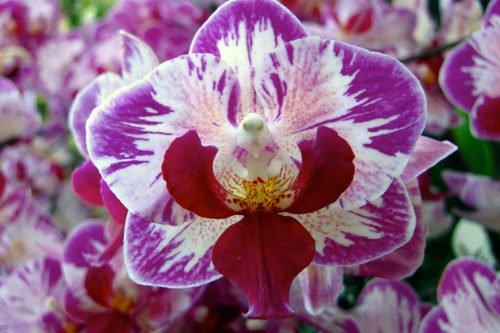 Как пересаживать орхидеи в домашних условиях