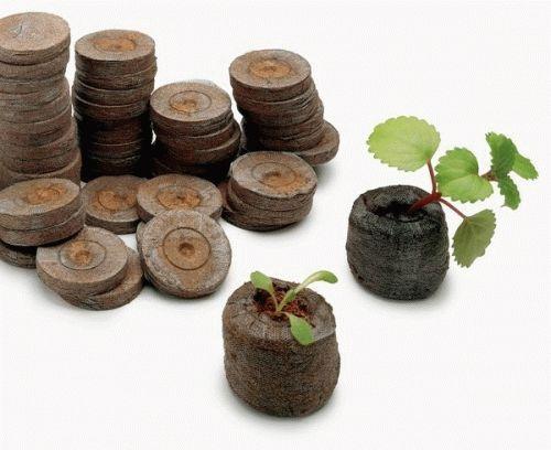 Выращивание рассады в торфяных таблетках их семян