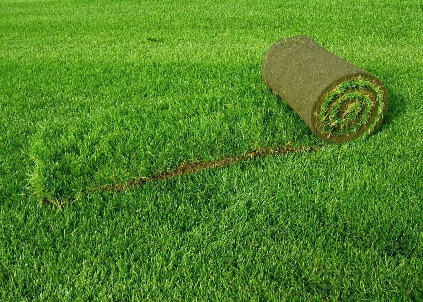 Зеленый ковер - один из видов газона