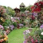 Цветы в саду от А до Я