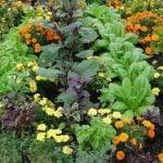 Соседство растений