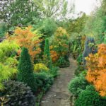 Декоративные кустарники и деревья для вашего сада