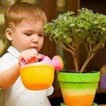 Комнатные растения в нашей жизни