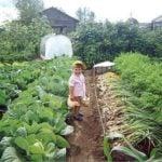 Метод Митлайдера — секрет удачного урожая