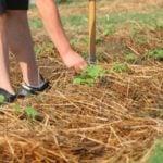 Органическое садоводство