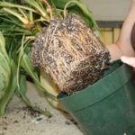 Как посадить комнатные растения