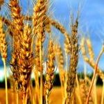 Что такое биозащита растений