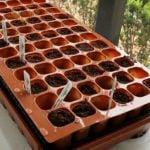 Емкости для выращивания рассады – кассеты и стаканчики