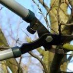 Выполнение обрезки деревьев