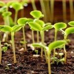 Как вырастить рассаду овощей – посев и уход