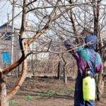 Как защитить сад весной?