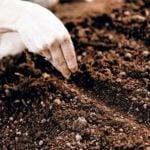 Новый безрассадный способ выращивания овощей