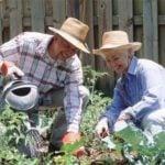 Календарь огородника-садовода на июнь