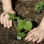 Календарь садовода-огородника в августе