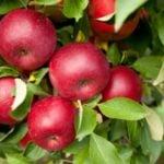 Календарь садовода-огородника на октябрь