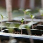 Что сеять в феврале – цветы и овощи
