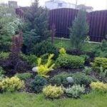 Как защитить хвойные растения от солнечных ожогов