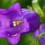 Советы по выращиванию двухлетних цветов на вашем участке.