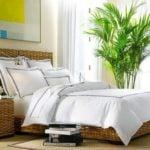 Растения в спальне – за и против