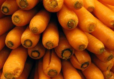 Выращивание моркови из семян – посадка и уход