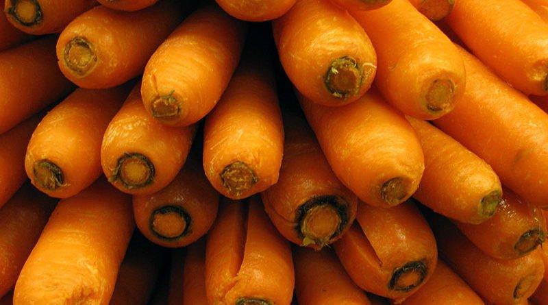 Посадка и уход за морковью