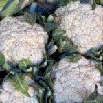 Выращивание цветной капусты – посадка и уход