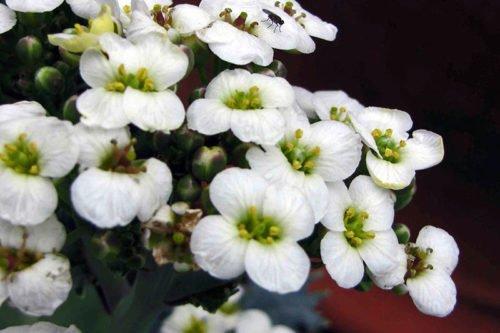 Посадка и уход за катраном – выращивание в грунте