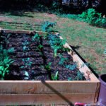 Подготовка почвы к весенне-летнему сезону