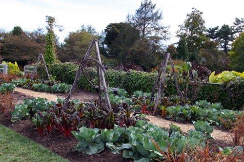 Требования к почве на огороде