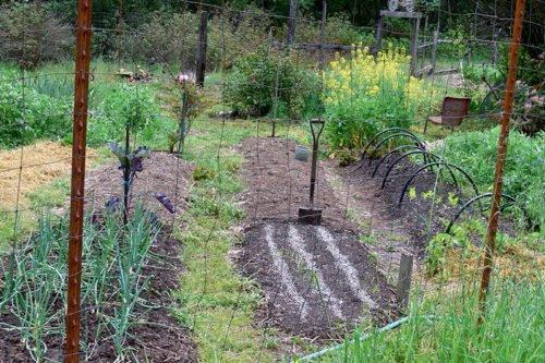 Подготовка почвы под огород