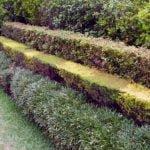 Лучшие кустарники для живой изгороди